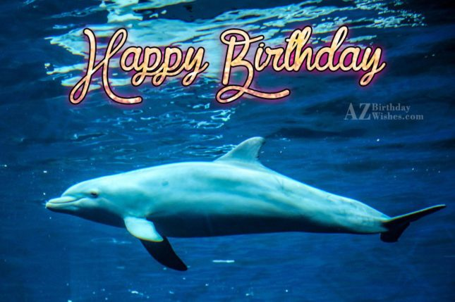 Happy Birthday on Dolphin in water… - AZBirthdayWishes.com