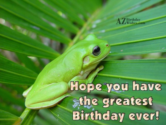 Hope you have the greatest birthday…Happy birthday with frog background - AZBirthdayWishes.com