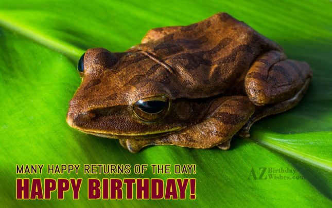 Many happy returns of the day. Happy birthday with frog sitting on leaf in the background - AZBirthdayWishes.com